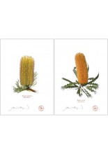 Banksia Flower Collection 2 Diptych