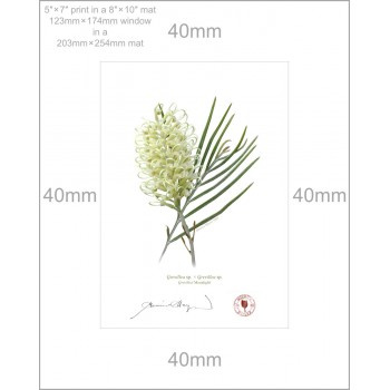 112 Grevillea 'Moonlight' - 5″ × 7″ Print Ready to Frame With 8″ × 10″ Mat and Backing