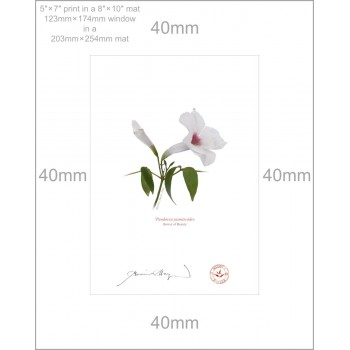 123 Pandorea jasminoides - 5″ × 7″ Print Ready to Frame With 8″ × 10″ Mat and Backing