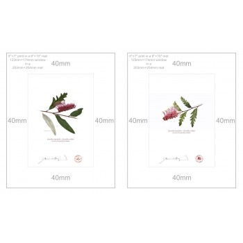 Grevillea 'Poorinda Royal Mantle' Diptych - 5″ × 7″ Prints Ready to Frame With 8″ × 10″ Mats and Backing
