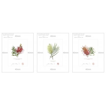 Grevillea Collection 3 Triptych - 5″ × 7″ Prints Ready to Frame With 8″ × 10″ Mats and Backing