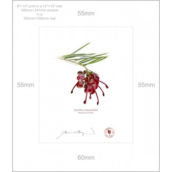 041 Rosemary Grevillea (Grevillea rosmarinifolia) - 8″ × 10″ Print Ready to Frame With 12″ × 14″ Mat and Backing