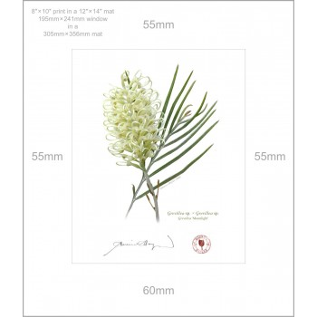 112 Grevillea 'Moonlight' - 8″ × 10″ Print Ready to Frame With 12″ × 14″ Mat and Backing