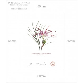 188 Grevillea 'Bulli Princess' - 8″×10″ Print Ready to Frame With 12″×14″ Mat and Backing