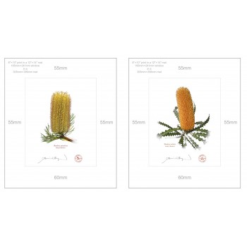 Banksia Flower Collection 2 Diptych - 8″ × 10″ Prints Ready to Frame With 12″ × 14″ Mats and Backing