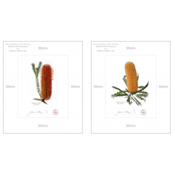 Banksia Flower Collection 4 Diptych - 8″ × 10″ Prints Ready to Frame With 12″ × 14″ Mats and Backing