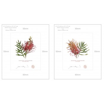 Grevillea Collection 1 Diptych - 8″ × 10″ Prints Ready to Frame With 12″ × 14″ Mats and Backing