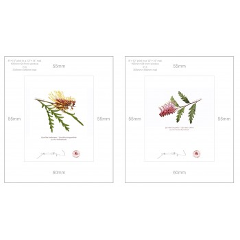 Grevillea Collection 2 Diptych - 8″ × 10″ Prints Ready to Frame With 12″ × 14″ Mats and Backing