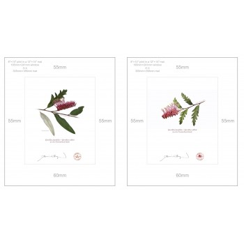 Grevillea 'Poorinda Royal Mantle' Diptych - 8″ × 10″ Prints Ready to Frame With 12″ × 14″ Mats and Backing