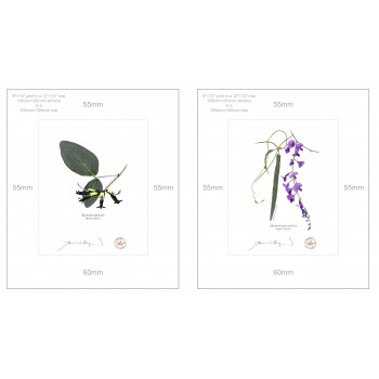 Two Coral Peas Diptych - 8″×10″ Prints Ready to Frame With 12″×14″ Mats and Backing