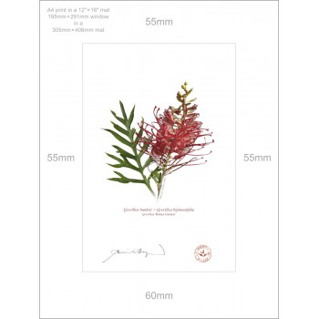 149 Grevillea 'Robyn Gordon' - A4 Print Ready to Frame With 12″ × 16″ Mat and Backing