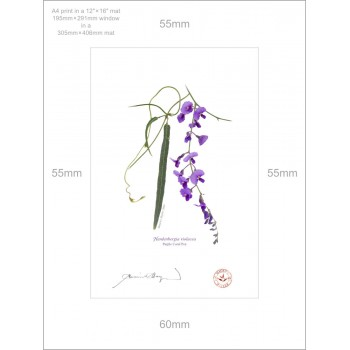 203 Hardenbergia violacea - A4 Print Ready to Frame With 12″ × 16″ Mat and Backing