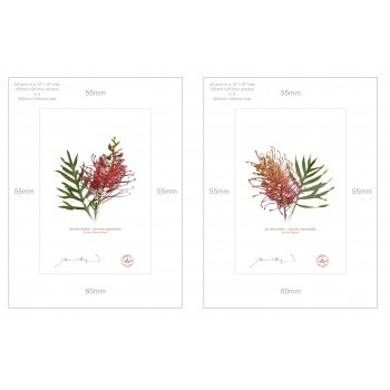 Grevillea Collection 1 Diptych - A4 Prints Ready to Frame With 12″ × 16″ Mats and Backing