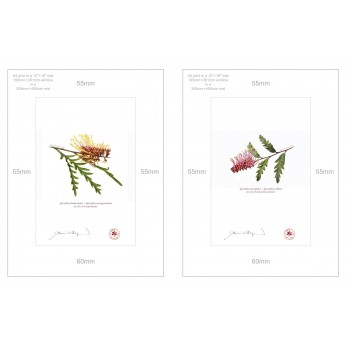 Grevillea Collection 2 Diptych - A4 Prints Ready to Frame With 12″ × 16″ Mats and Backing