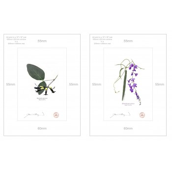 Two Coral Peas Diptych - A4 Prints Ready to Frame With 12″ × 16″ Mats and Backing