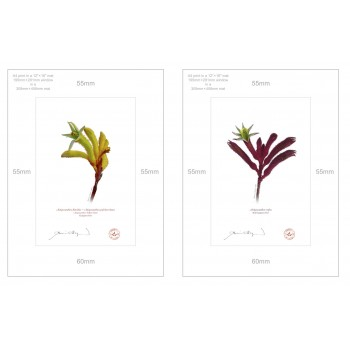 Kangaroo Paw (Anigozanthos) Diptych - A4 Prints Ready to Frame With 12″ × 16″ Mats and Backing