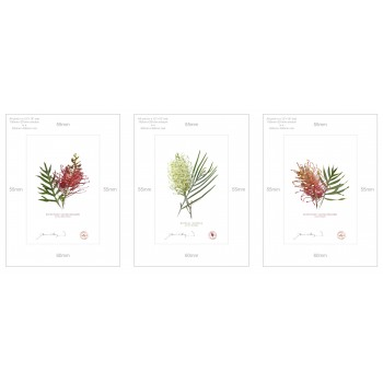 Grevillea Collection 3 Triptych - A4 Prints Ready to Frame With 12″ × 16″ Mats and Backing