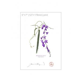 203 Hardenbergia violacea - 5″×7″ Flat Print, No Mat