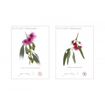 Eucalyptus leucoxylon subspecies Diptych - 5″×7″ Flat Prints, No Mats