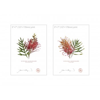 Grevillea Collection 1 Diptych - 5″ × 7″ Flat Prints, No Mats