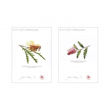 Grevillea Collection 2 Diptych - 5″×7″ Flat Prints, No Mats
