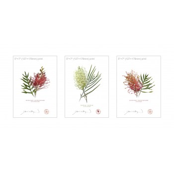 Grevillea Collection 3 Triptych - 5″ × 7″ Flat Prints, No Mats