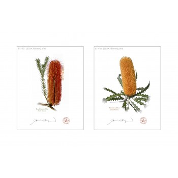 Banksia Flower Collection 4 Diptych - 8″ × 10″ Flat Prints, No Mats