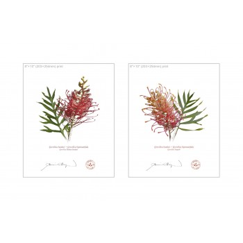 Grevillea Collection 1 Diptych - 8″ × 10″ Flat Prints, No Mats