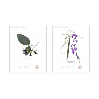 Two Coral Peas Diptych - 8″×10″ Flat Prints, No Mats