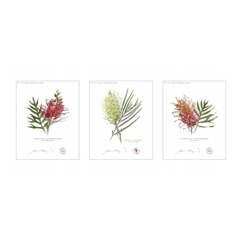 Grevillea Collection 3 Triptych - 8″ × 10″ Flat Prints, No Mats