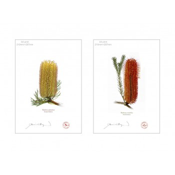 Banksia Flower Collection 3 Diptych - A4 Flat Prints, No Mats
